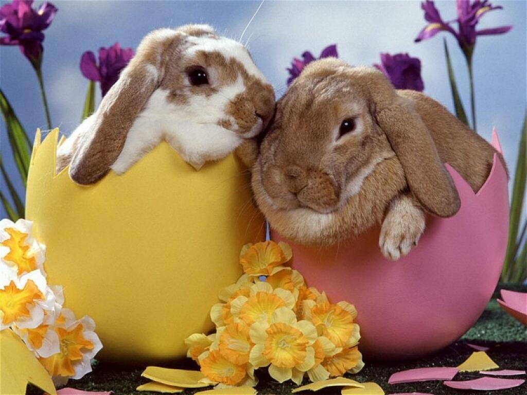 le lapin est en avance :)  lapin-de-paques-12